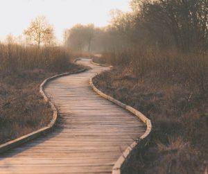 financial path